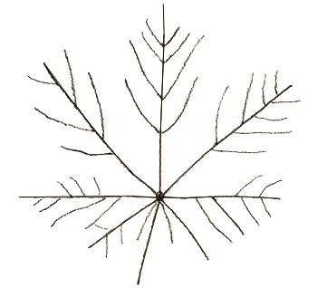 Как нарисовать листья, шаг 2