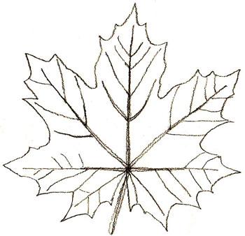 Картинки кленовый листопад