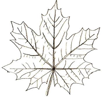 Как нарисовать листья, шаг 5