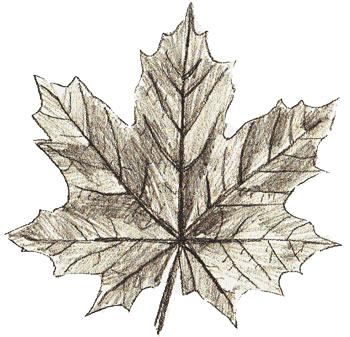 Раскраски формы листьев