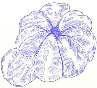 Рисунок мандарина, шаг 6