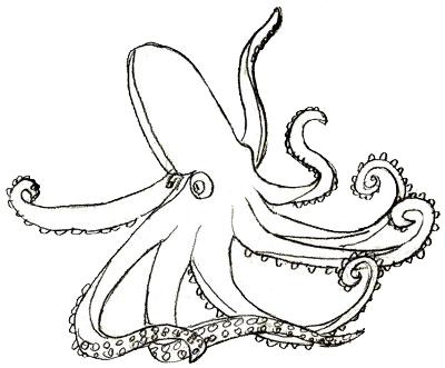 Как нарисовать осьминога, шаг 5