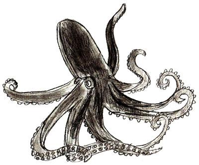Как нарисовать осьминога, шаг 6