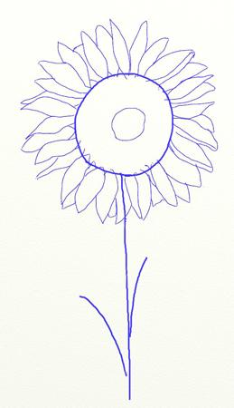Как нарисовать подсолнух, шаг 4