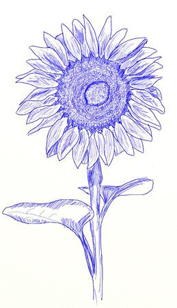 Как нарисовать подсолнух, шаг 6