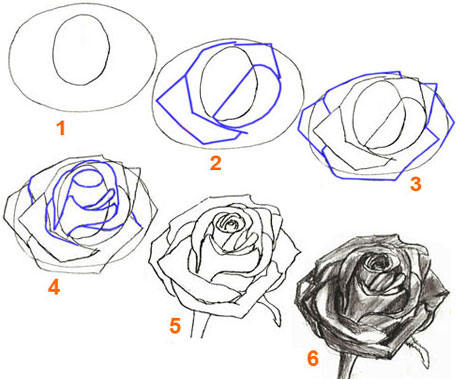 Как рисовать лепестки розы