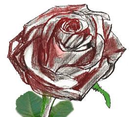 Рисунок бутона розы