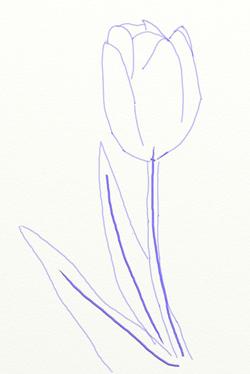 Как нарисовать тюльпан, шаг 3