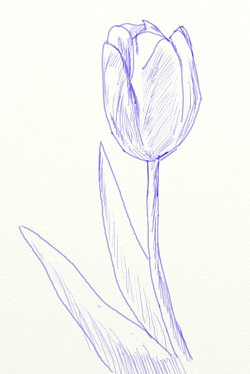 Как нарисовать тюльпан, шаг 5