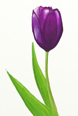 Как нарисовать тюльпан, шаг 6