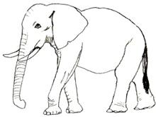 Як намалювати Слона поетапно