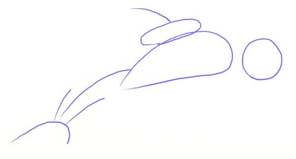 Как нарисовать дельфина, шаг 2