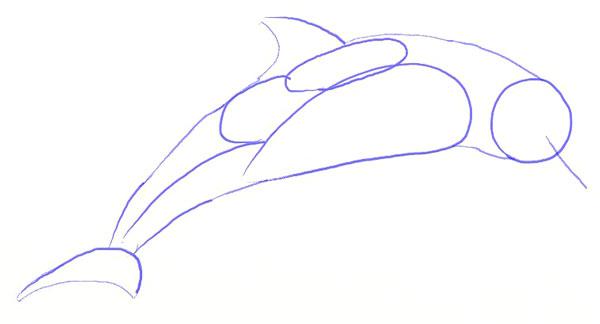 Как нарисовать дельфина, шаг 3
