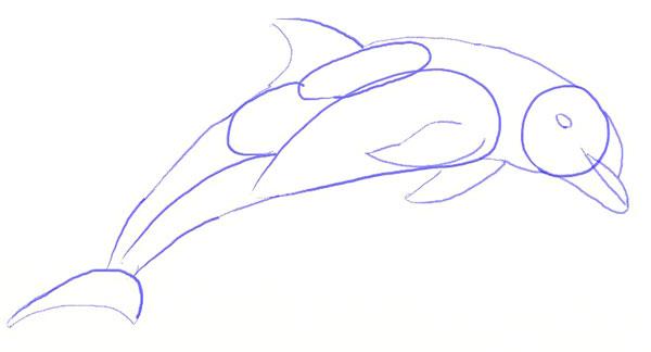 Как нарисовать дельфина, шаг 4