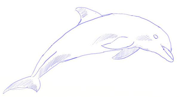 Как нарисовать дельфина, шаг 5