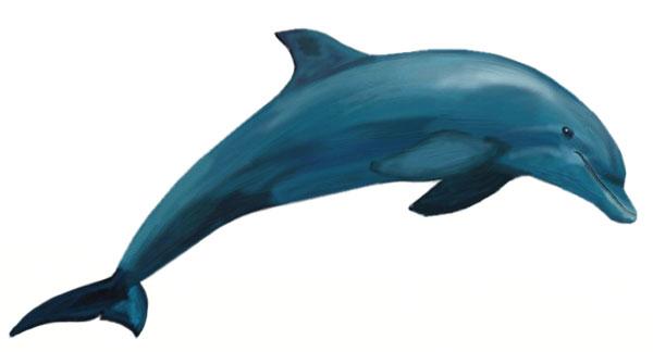 Как нарисовать дельфина, шаг 7
