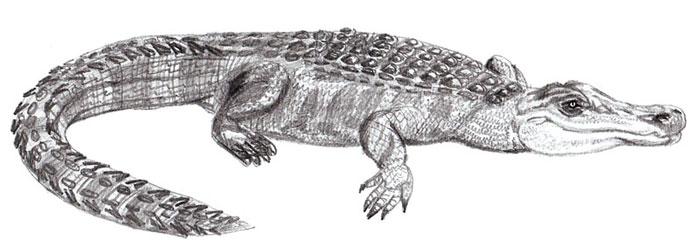 Как нарисовать крокодила поэтапно