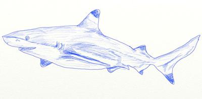 Как нарисовать кита рыбу поэтапно 60