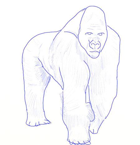 Как нарисовать обезьяну, шаг 6