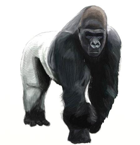 Как нарисовать обезьяну, шаг 7